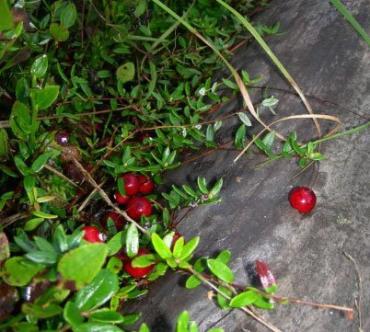 Грибы-ягоды покупали-продавали, а налог на прибыль не платили