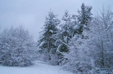 В выходные будут метели и мороз.