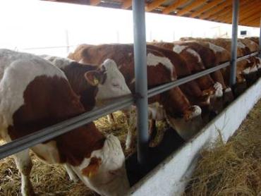 Развитие животноводства на Закарпатье