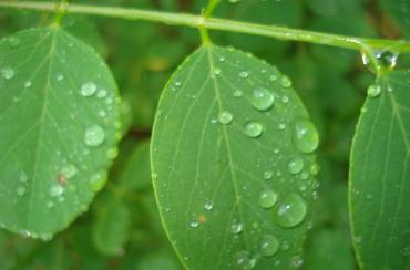 По городу Ужгород ожидается дождь, гроза