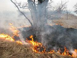 В результате утечки газа загорелась трава