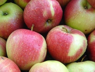 На яблуках заробляють заготівельники і даішники