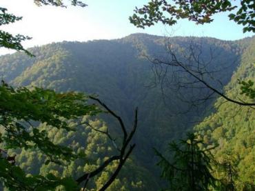 Запаси деревини в лісах Закарпаття становлять близько 200 млн. кубометрів