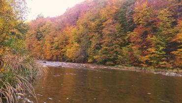 Фото лісу на Закарпатті, через який протікає річка