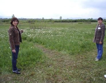 Долине нарциссов в Закарпатской области грозит полное зарастание ивой
