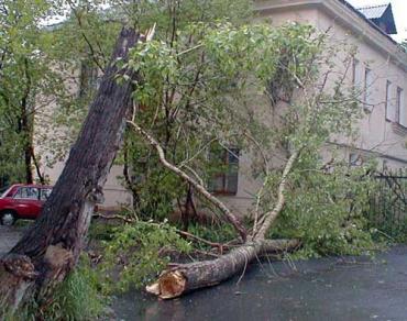 В Мариуполе дерево раздавило «Газель»