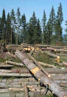 Розмір шкоди, завданої лісовим ресурсам, склав 66,294 тис. грн.
