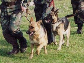 Прикордонникам допомагають в роботі близько півтори тисячі службових собак