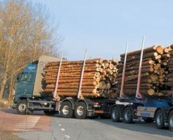 В Раховском районе должностные лица нарушали Лесной Кодекс