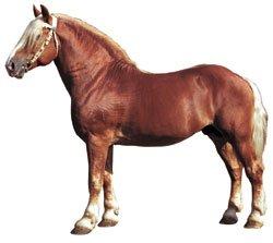У 20-летнего жителя Мукачева силой отобрали коня