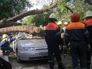 МЧС освобождает авто от упавшего дерева