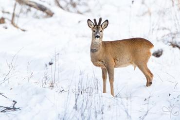 Тваринний світ є одним з основних компонентів лісового середовища Закарпаття