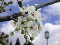 Завтра на Закарпатье ожидается 20-23° тепла