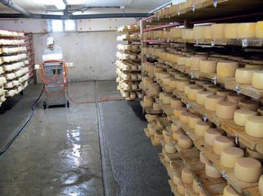 В сыроварне всегда поддерживается специальный температурный режим и уровень влажности