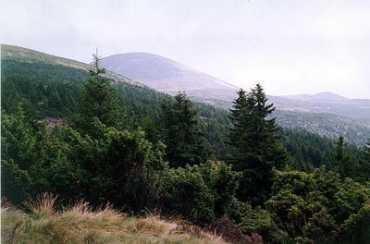 """Лесной заказник """"Темнатик"""" занимает площадь 1215 гектаров"""