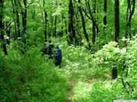 На Закарпатті нараховують сім так званих чорних лісів
