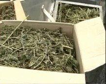 В Черниговской области обезвредили банду наркоторговцев