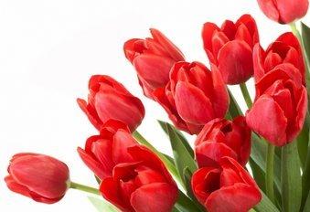 День 8 березня несе у світ ніжність і красу!