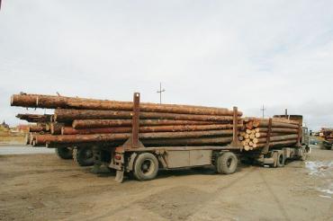 """В Тячевском районе лесовоз перевозил """"левый"""" лес"""