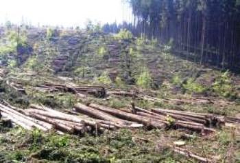 Без інвестицій деревообробна галузь на Закарпатті занепадає і терпить збитки