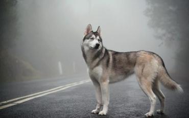 Тягнув собаку за авто: українці розшукують водія-живодера