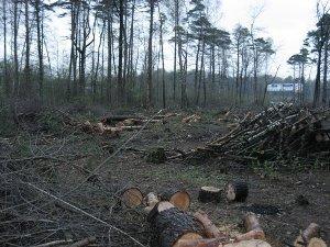 В Закарпатье назаконно вырубили лес на 1,4 миллиона гривен