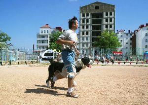 В Мукачево состоится выставка собак