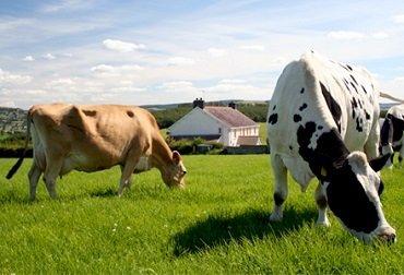 Фермерське господарство є формою підприємницької діяльності