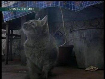 В Харьковской области кот съел человека