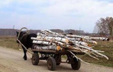 Закарпатские бюджетные учреждения за 100 миллионов должны отказаться от газа