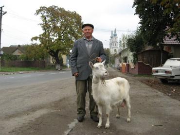 80-річний Михайло Палетич вранці йде Перечином з білою козою