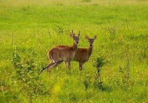 В Закарпатті на території ферми оленів збудують туристичний комплекс