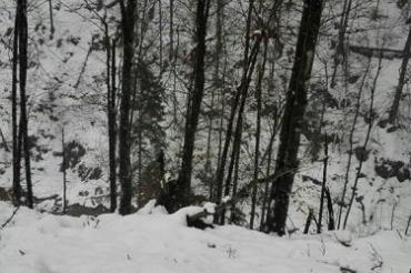 В Закарпатье во время незаконной заготовки дров погиб мужчина