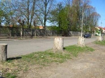 В Ужгороде улицу Капушанскую «украшают» лишь пни деревьев