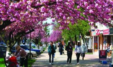 Посетив Ужгород в середине апреля, вы уже застанете цветение сакур