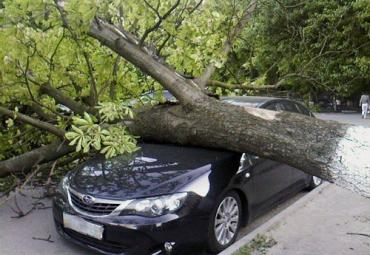 В Киеве падают деревья...
