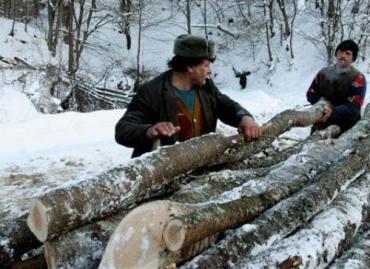 Австрияки вырубят Карпаты под Зимнюю Олимпиаду по-сочински