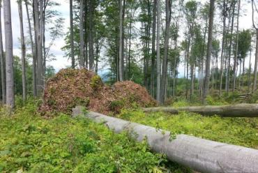 Лісівники Ужгородщини рахують результати лісокультурної кампанії
