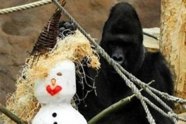 В Праге всех обезьян заставили лепить убойного снеговика