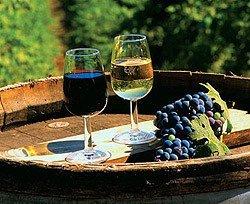 Виноделы из 16 стран устроили выставку в Ялте