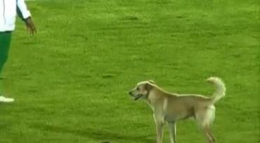 Собака дважды останавливала сегодняшний матч в Ужгороде
