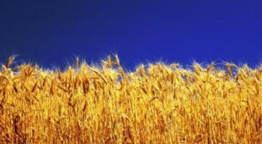 21 серпня відбудеться районне свято «Рушник вишиваний – на щастя, на долю…»