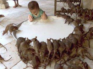 В їдальні однієї з ужгородських шкіл розвелися гризуни