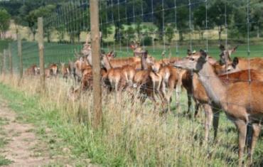 В Закарпатье построят питомник для разведения оленей