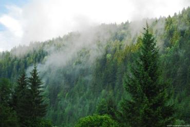 Вірш закарпатця Юрія Шипа присвячений лісу, лісівникам і садівникам