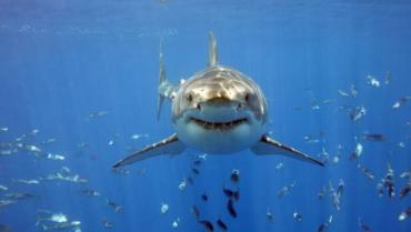 Ужгородець в перший день відпочинку врятував від акули 20-річну дівчину