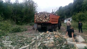 «Чорні лісоруби» – одна з головних проблем лісового господарства Закарпаття