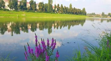 Найчистіші ріки на території нашої держави — у Карпатах.