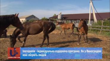 """Кінний центр """"Селід"""" у Виноградові вже 5-й рікпрацює лікує людей!"""