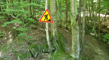 Закарпаття. Диво-знак у лісах на Перечинщині.